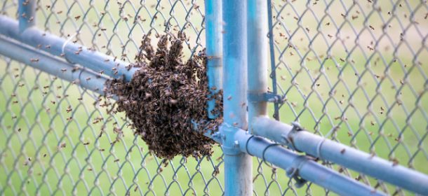 Swarm of bees seriously disrupts Dolphins minicamp
